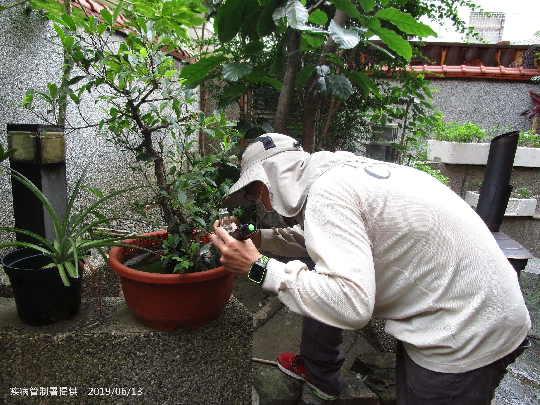 圖1-疾管署防疫人員仔細檢視盆栽是否有病媒蚊孳生